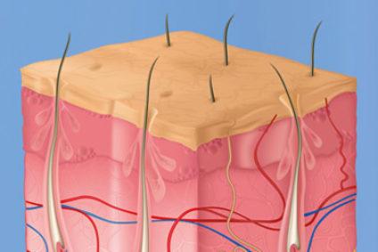 Querschnitt der Haut. Illustration.