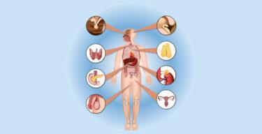 Anatomische Ansicht des menschlichen Körpers mit Vergrößerung der Körperteile, die Hormone produzieren.